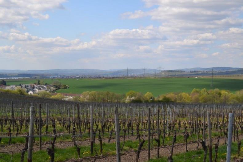 Urlaub im Rheingau