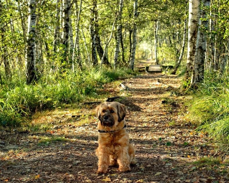 Urlaub mit Hund in Oberhof