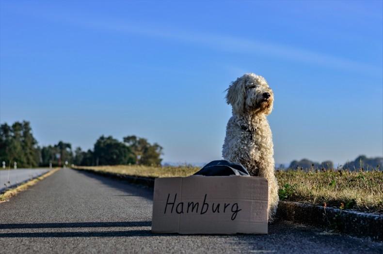 Reisen mit Hund – auch in vielen Hotels möglich