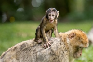 Zoo Deutschland - Affe