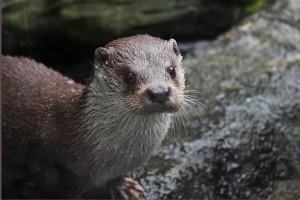 Zoo Deutschland - Otter