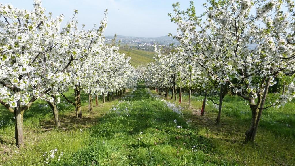spring-345623_1280