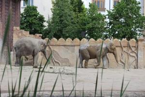 Elefanten - Zoo Leipzig
