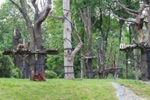 Orang Utan - Zoo Leipzig